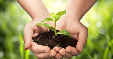 Şifa veren bitkileri yakından tanıyor musunuz?