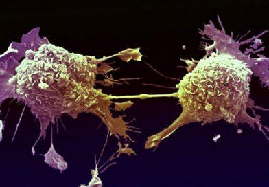 Bitkisel Kanser Tedavisi için Şifalı Bitki ve Otlar Hangileri