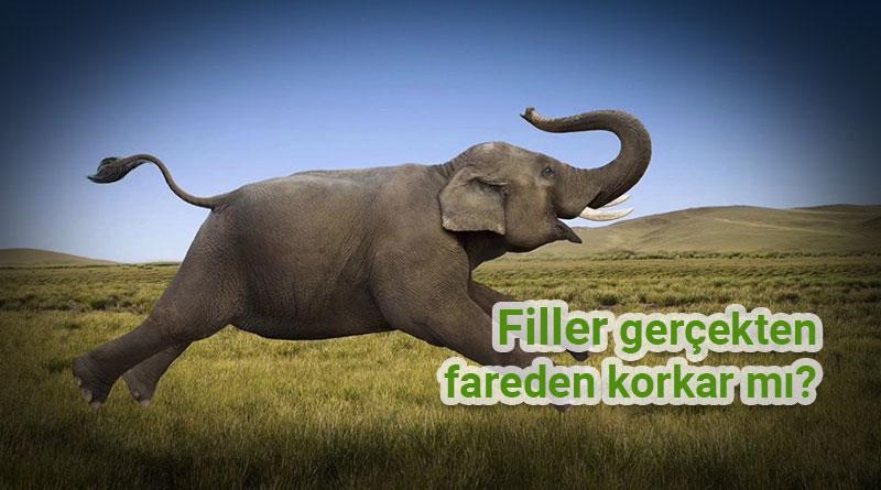 filler fareden korkar mı