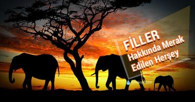 Filler Hakkında Merak Edilen Herşey