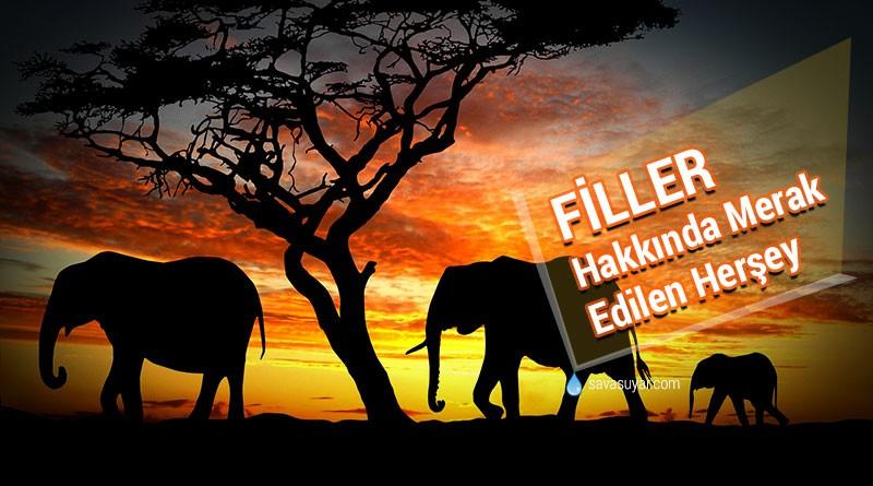 fillerin yaşamı